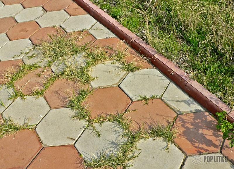 Как избавиться от травы между тротуарной плиткой: эффективные способы 13-3