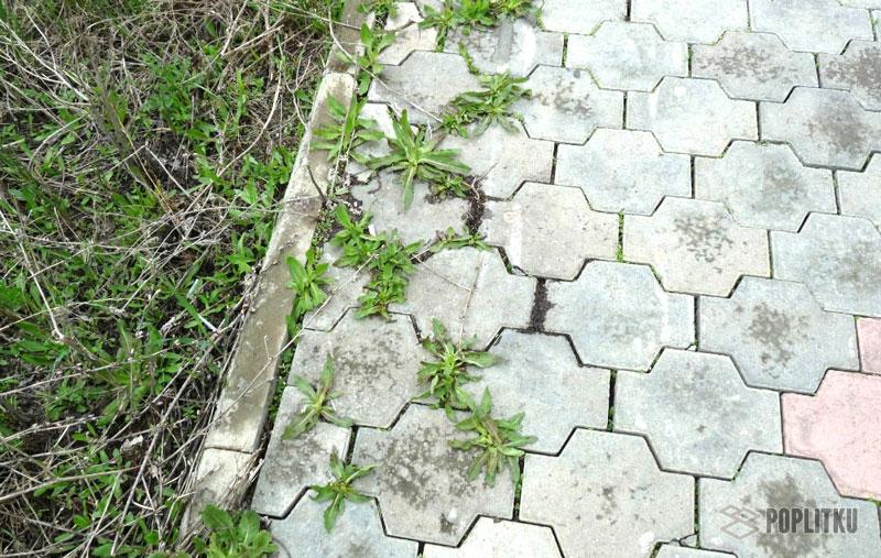 Как избавиться от травы между тротуарной плиткой: эффективные способы 13-6
